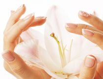 Beauty delicate hands with manicure holding flower lily close up isolated on white perfect shape Stock Images