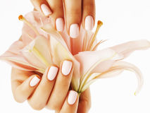 Beauty delicate hands with manicure holding flower lily close up isolated on white Royalty Free Stock Images
