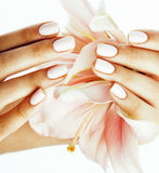 Beauty delicate hands with manicure holding flower lily close up isolated on white Royalty Free Stock Photography