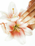 Beauty delicate hands with manicure holding flower lily close up isolated on white Royalty Free Stock Image