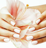 Beauty delicate hands with manicure holding flower lily close up  on white, woman perfect shape Royalty Free Stock Image