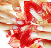 Beauty delicate hands with pink Ombre design manicure holding re Royalty Free Stock Photo