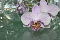 Beauty delicate orchid Royalty Free Stock Image