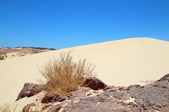 Beauty of desert. Beautiful sand dune in desert Stock Photography