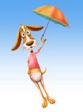Beauty dog fly with umbrella Stock Photos
