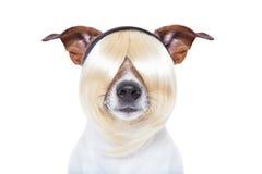 Beauty dog Stock Photo