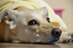 Beauty dog. This is very nice relax in the afternoon Royalty Free Stock Photography