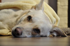 Beauty dog. This is very nice relax in the afternoon stock image