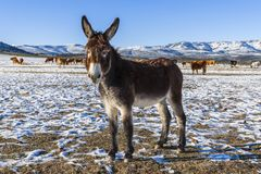 The beauty of donkeys stock images