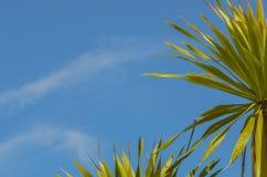 Beauty of dracaena plant. Royalty Free Stock Photos