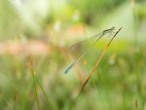 Beauty dragonfly on the grass Stock Image