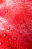 Beauty drops of water Royalty Free Stock Photo