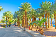 The beauty of Eilat. EILAT, ISRAEL - FEBRUARY 23, 2016: The luxury Israeli resort boasts the best sand beaches, lush tropic gardens, warm sea and magnificent Stock Photos
