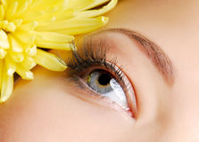 Beauty eye. Beautiful woman`s open eye. Yellow camomile on background Royalty Free Stock Images
