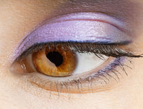 Beauty eye Royalty Free Stock Image
