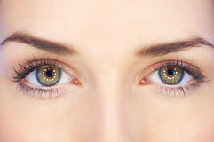 Beauty Eyes Royalty Free Stock Image