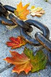 Beauty of  fading autumn. And rusty chain Royalty Free Stock Photo