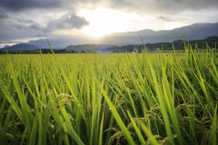 The beauty of the farmland in Taitung Taiwan Stock Photos