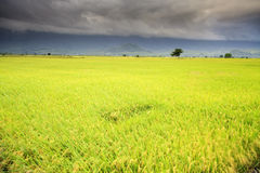 The beauty of the farmland in Taitung Taiwan Royalty Free Stock Photography