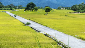 The beauty of the farmland in Taitung Taiwan Royalty Free Stock Image
