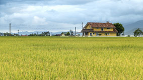 The beauty of the farmland in Taitung Taiwan Stock Image