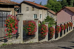 Beauty fence decoration with flowering red geranium cascade flowers in the pot Royalty Free Stock Images