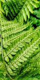 Beauty of ferns royalty free stock images
