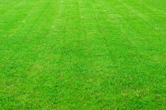 Beauty field with green grass Royalty Free Stock Photos