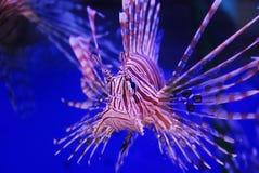 Beauty fish stock photo