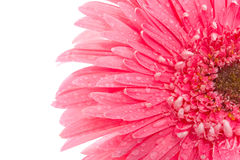 Beauty flower Stock Photo