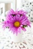 Beauty flower. Stock Photos