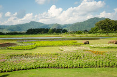 Beauty of flower garden and blue sky in Thailand Royalty Free Stock Image