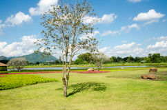 Beauty of flower garden and blue sky in Thailand Stock Image