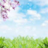 Beauty flower and grass spring season Stock Image