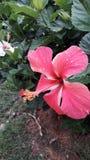 Beauty Flower orquidea stock photography