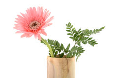 Beauty flower Stock Photos
