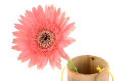 Beauty flower Stock Images