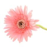 Beauty flower Stock Photo