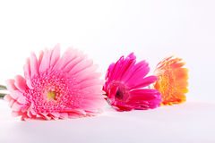 Beauty flowers Stock Photos