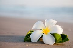 Beauty Flowers On The Beach Stock Image