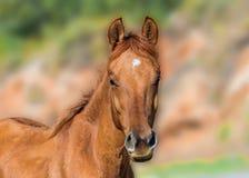 Beauty foal Stock Photo