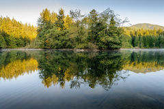 The Beauty of a Forest Reflected Stock Photos