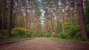 Beauty forest. Tree, wood, way Royalty Free Stock Image