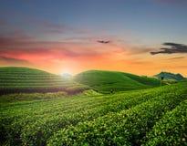 Beauty fresh green tea Royalty Free Stock Photography