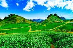 Beauty fresh green tea Stock Photos