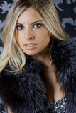 Beauty in fur Stock Images