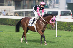 Beauty Generation wins the Violet Handicap in Hong Kong Stock Photos