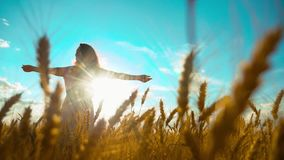 Beauty girl outdoors enjoying nature wheat field slow motion video. Beautiful girl in white dress running nature freedom. Happiness on the autumn field at stock video