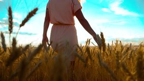 Beauty girl outdoors enjoying nature wheat field slow motion video. Beautiful girl in white dress running nature freedom. Happiness hands to the side on field stock video