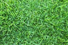 The beauty green garden Royalty Free Stock Photos